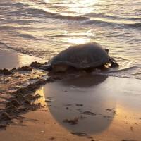 Turtle Eggstinction